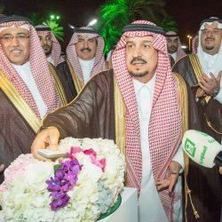 مشروع سعودي لزراعة مليون شجرة في عدد من المناطق