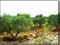 اكتشاف قبر صخري وتابوت برونزي من العصر السبئي في اليمن