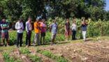 """سماد معجزة"""" سيغير مستقبل الزراعة في أفريقيا يفيد الفقراء"""
